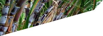 Novo Regime de Produção e Comercialização do GROG
